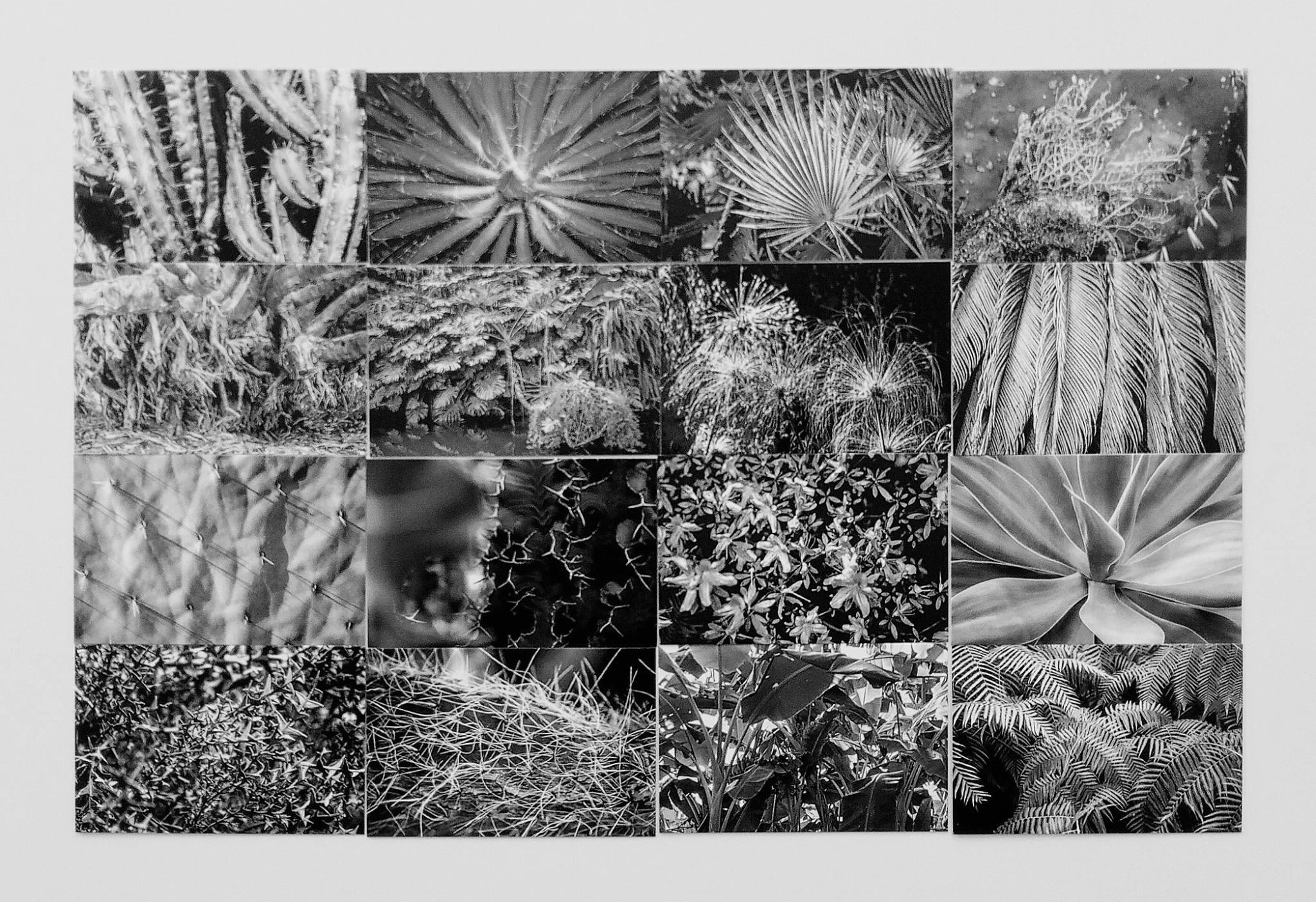 photographie d'art noir et blanc de végétaux, d'Antonin Amy-Menechetti.