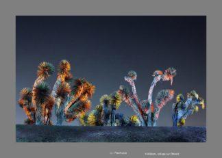 Cactus au Mexique de nuit éclairé de multiple couleurs