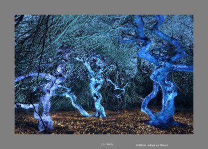 Forêt de nuit éclairé en bleu