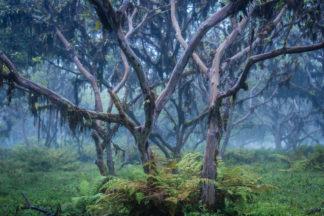 Photographie de voyage, forêt humide au Galapagos