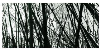 Photographie d'art, série hiver n°2