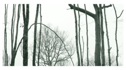 Photographie d'Art, forêt, série Hivert n°3