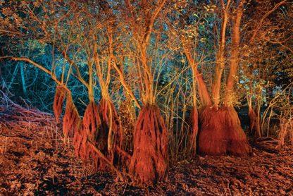 Photographie d'art, lightpainting Michel Séméniako